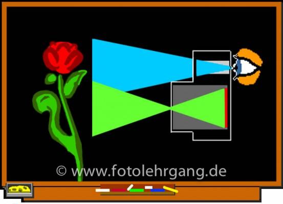 """Durch die Parallaxe zwischen Sucher und Objektiv sieht der Fotograf die Blüte, fotografiert wird aber der Stängel. (Illustration aus dem """"Fotolehrgang im Internet""""."""